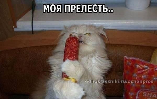http://cs613523.vk.me/v613523201/cc9f/rXVEXuoepGc.jpg