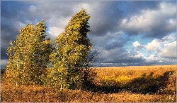 МЧС предупреждает жителей Саратовской области об усилении ветра  Помим