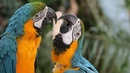 Funny Parrots Videos Compilation cute moment of the animals Cute Parrots 7
