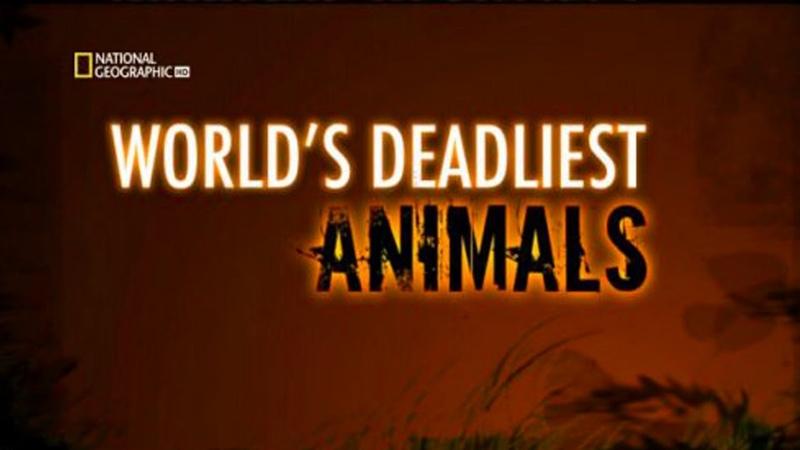 Самые опасные животные в мире Амазония National Geographic Документальный фильм