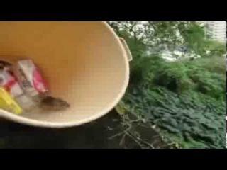 O Rato Se Mato Maluco
