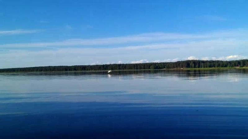 Animal Planet на Чудском озере