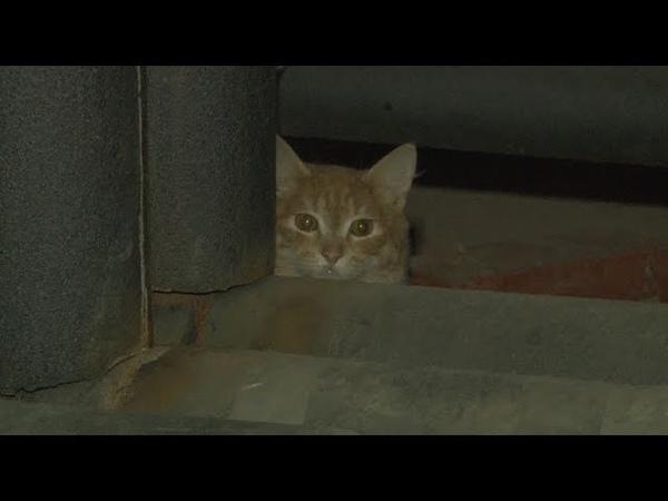 Сюжет ТСН24: Кошки оказались замурованы в подвале одного из тульских домов