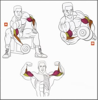 Поставьте ноги гораздо шире плеч.  Ступни плотно прижаты к полу.  Техника.