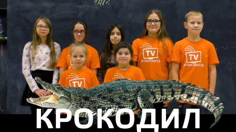 Крокодил Пожеланий Дяде Коле