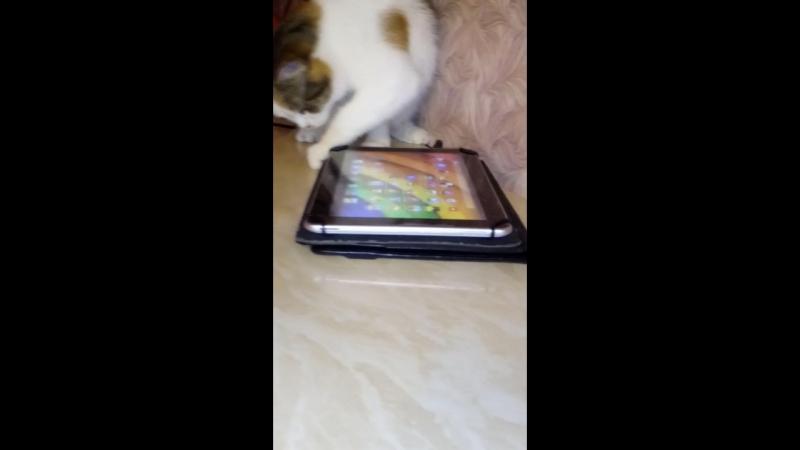 кошка Тася с планчетом