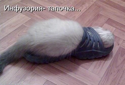 http://cs14102.vk.me/c7006/v7006798/16365/SbQVyGnApOs.jpg