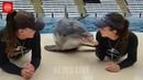 Սիրահարված դելֆինի համբույրը | Lovely Dolphin Kiss
