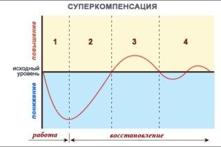 Вот такая кривая приводится во...  Любая спортивная тренировка основывается на принципе суперкомпенсации...