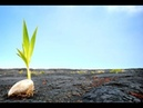 Происхождение жизни: Творение и эволюция - новый взгляд