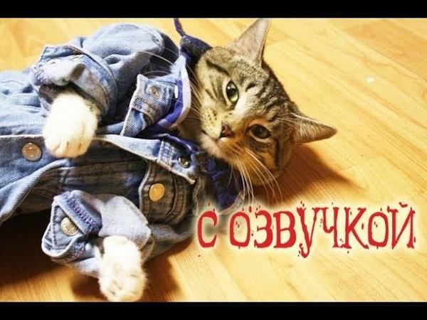 Приколы с котами – озвучка животных – Первый сборник кота Мурзика – Domi Show