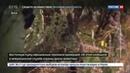 Новости на Россия 24 • Восточная пума официально признана вымершей