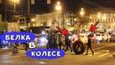 БЕЛКА В КОЛЕСЕ (ОТ ТРАКТОРА) / КАТАЕМСЯ ПО ЦЕНТРУ ПИТЕРА