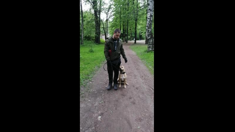 Прайтер Иса и Артур Даём собаке нагрузку в виде команды Рядом