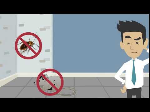 Центр дезинфекции уничтожение насекомых, грызунов, запаха, плесени, клопов, тараканов, клещей