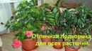 Мои цветы и супер подкормка для всех комнатных растений