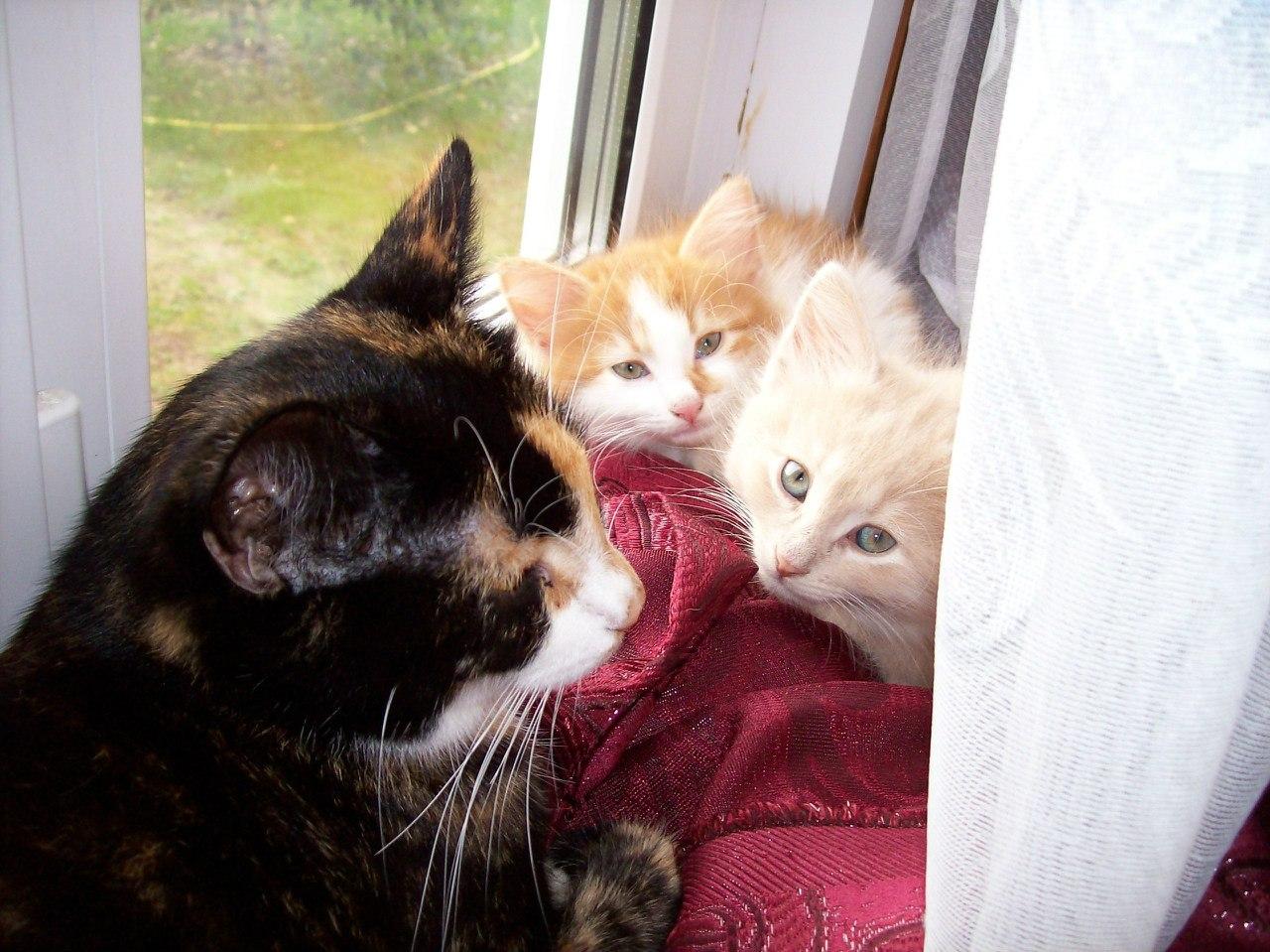 Моя любимая кошачья семейка
