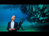 Let's turn the high seas into the world's largest nature reserve Enric Sala
