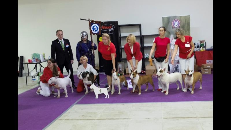 Лучший питомник национальная выставка собак породы бультерьер 2018г
