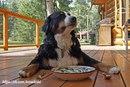 - Я учил пса лаять, когда он захочет есть.