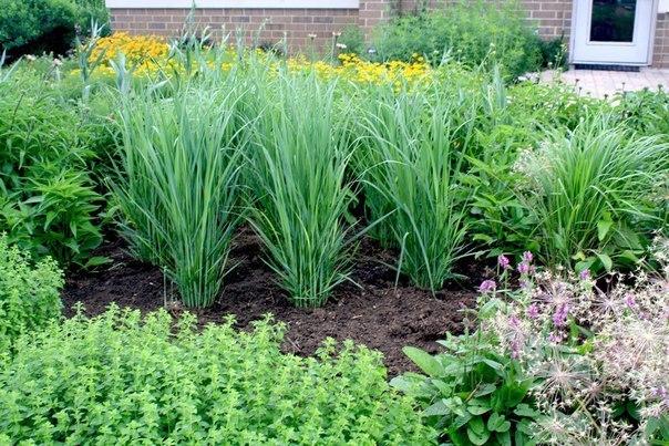 Какие растения защитят ваш участок от вредителей?