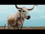 alt-J - Left Hand Free (Official Video) 1