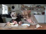 две собаки завтракают
