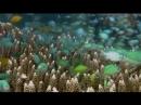 Cómo es el fondo del mar.mp4