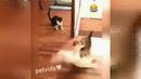 Доза юмора Авто приколы, приколы про собак и кошек
