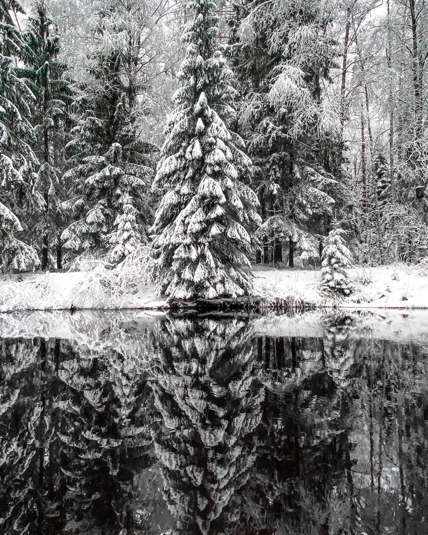 """Начало января в природном заказнике """"Линдуловская роща"""" в Выборгском районе Ленобласти, вдоль Рощинк..."""