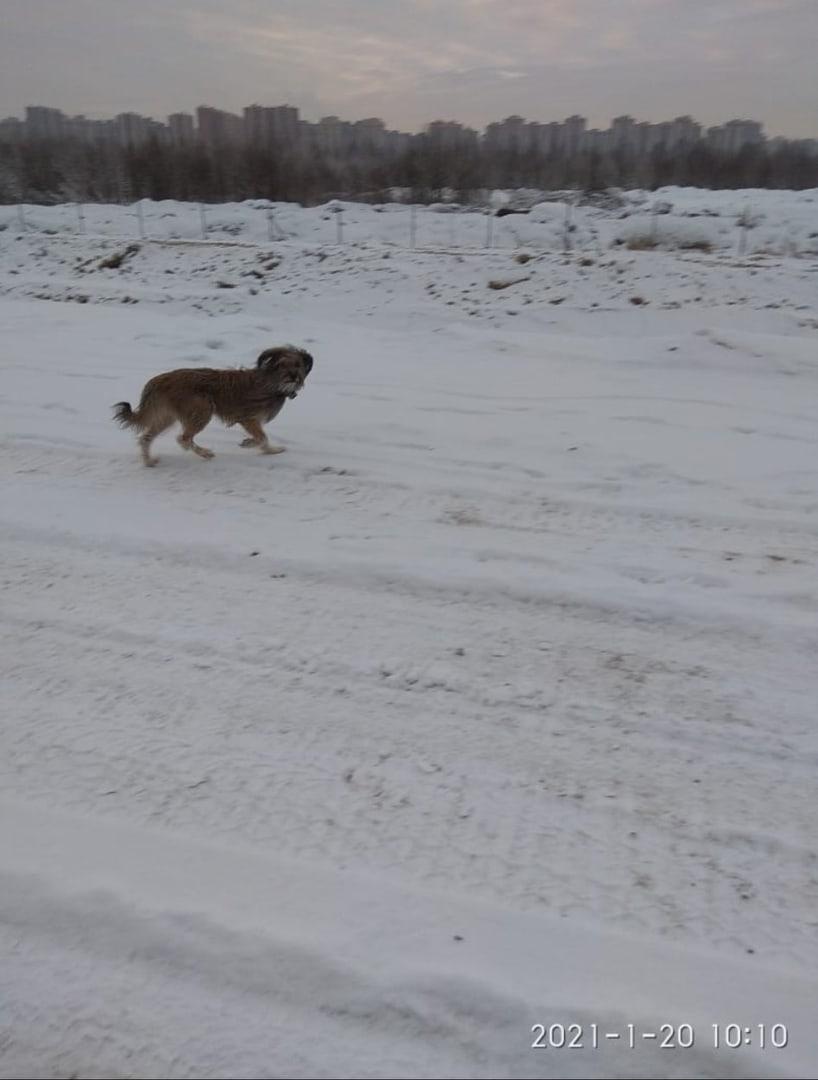 Очень нужна помощь в поиске собаки по кличке Мишка. Утром 20 января Мишу видели строители в районе ...