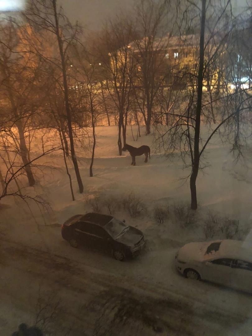 Пожар сегодня, 23 февраля в Красносельском районе Санкт-Петербурга полностью уничтожил частный дерев...