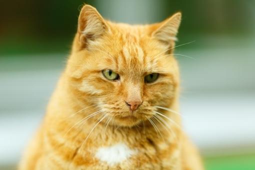 Потерялся самый старший кот музея Анны Ахматовой Ося. Последний раз его видели в ночь с 7 на 8 октяб...
