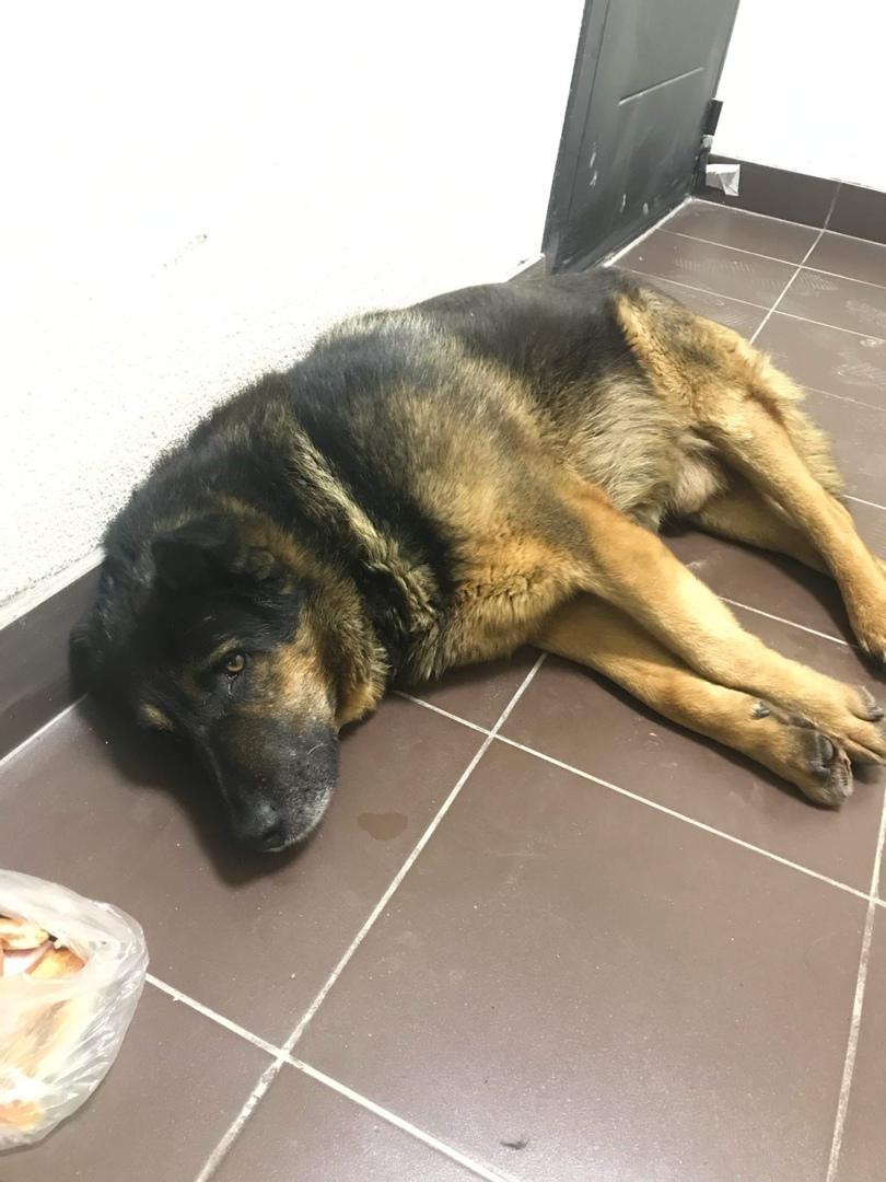 Мурино , На Воронцовском бульваре 19 (3 парадная ) лежит собака . Вся мокрая ,дрожит ,ничего не куша...
