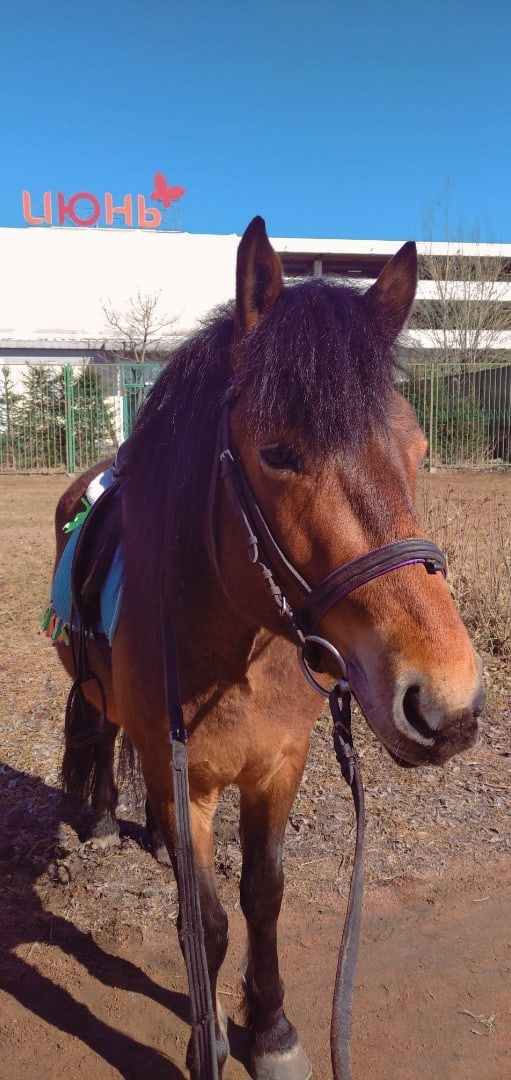 26 апреля примерно с 22:00 вечера в деревне Заневка был украден конь с конюшни. Жеребец, гнедой мас...