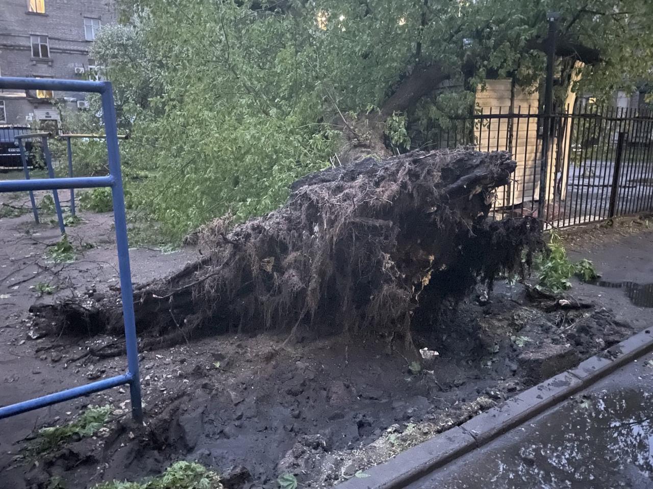 Во дворе дома 8 по Сестрорецкой улице в Приморском районе дерево придавило машину и детскую площадку...