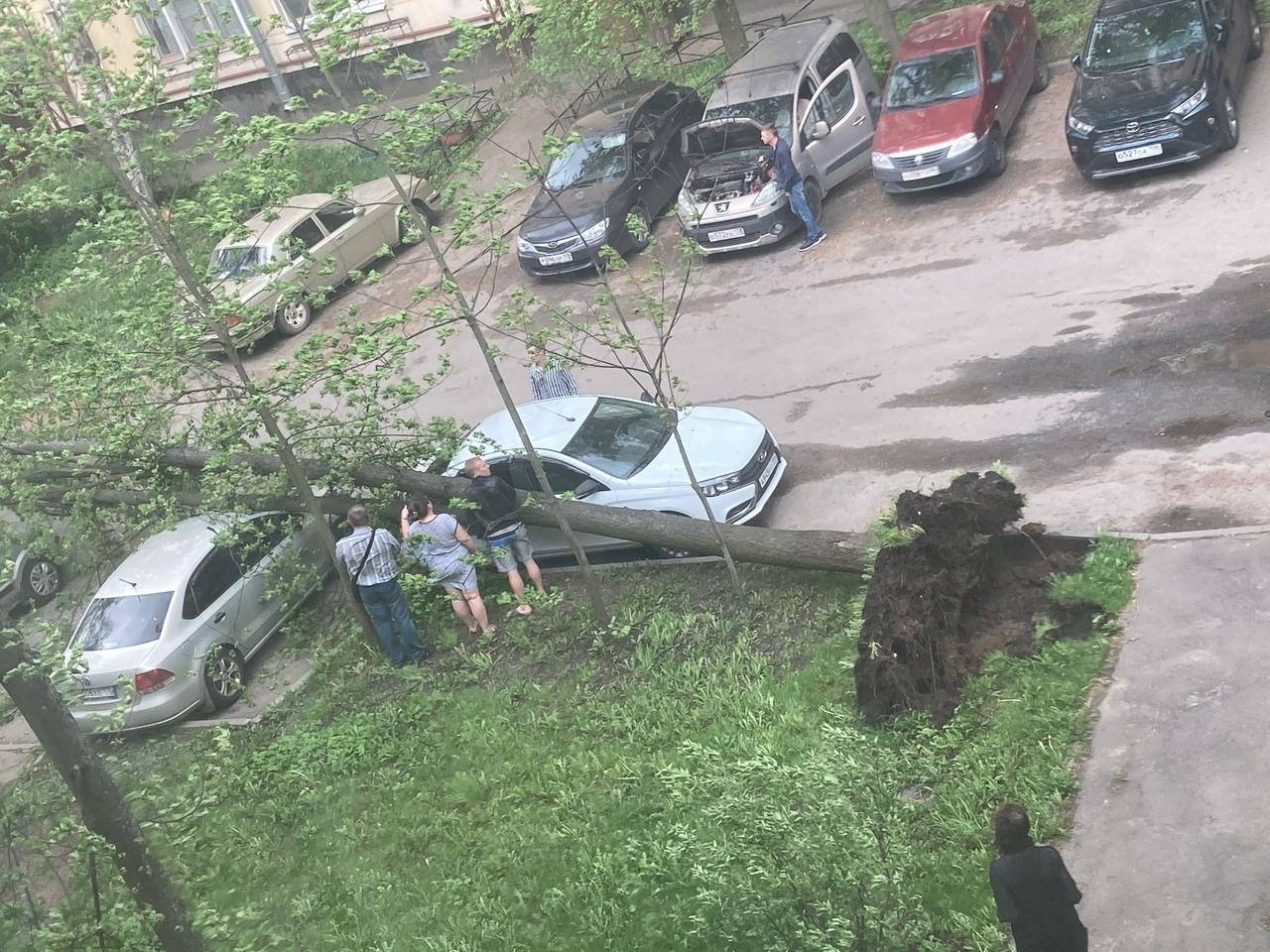 1) На Бородинской от сильного ветра рухнул клён, завалив чёрный вход в школу 308 2) На Римского-Корс...