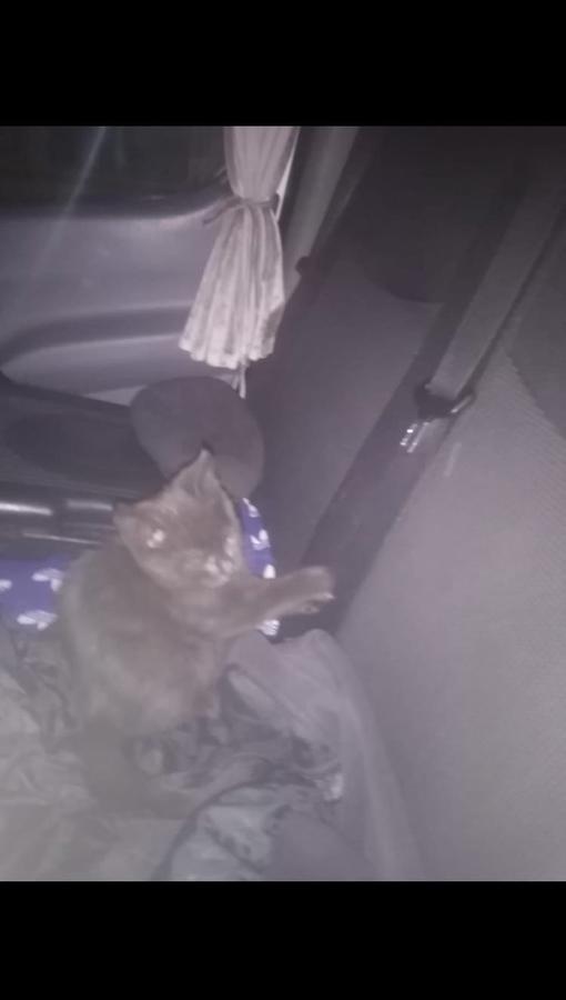 Здравствуйте чёрный котёнок залез под капот машины, в Ростове на Дону , но машина едет в Питер , мо...