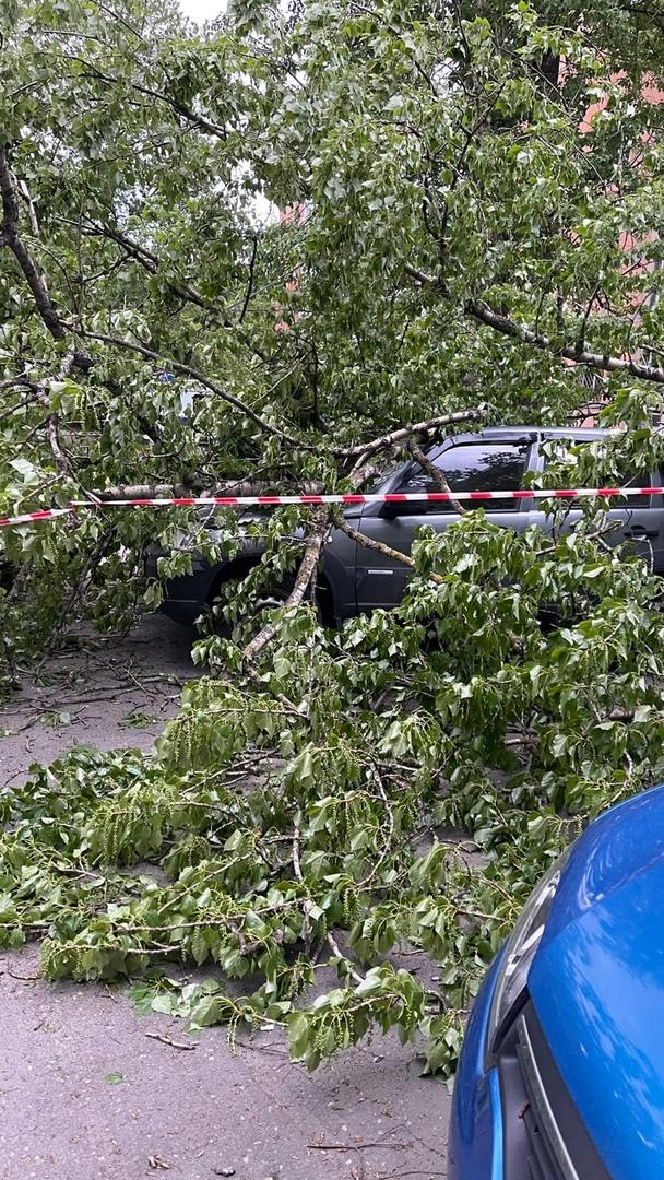 Во дворе дома Костюшко 13 повалило дерево на авто. Огорожено красной лентой. Рядом стоят ППС-Ники от...
