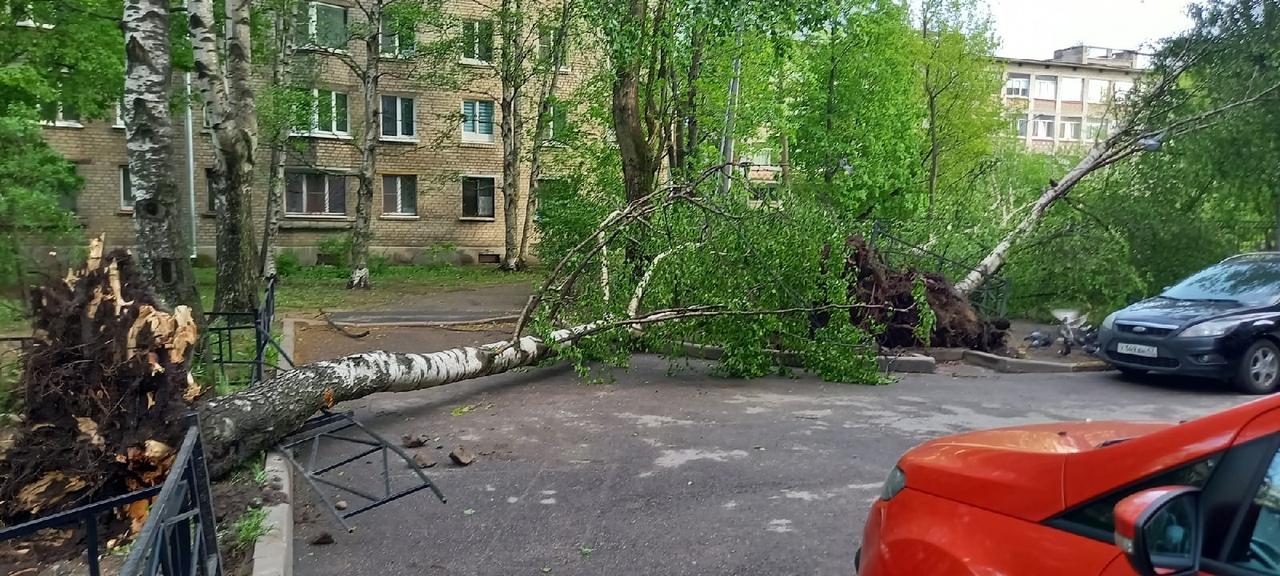 Во дворе дома 2/57 по Ланскому шоссе упало 3 больших дерева одно упало на школьный забор.