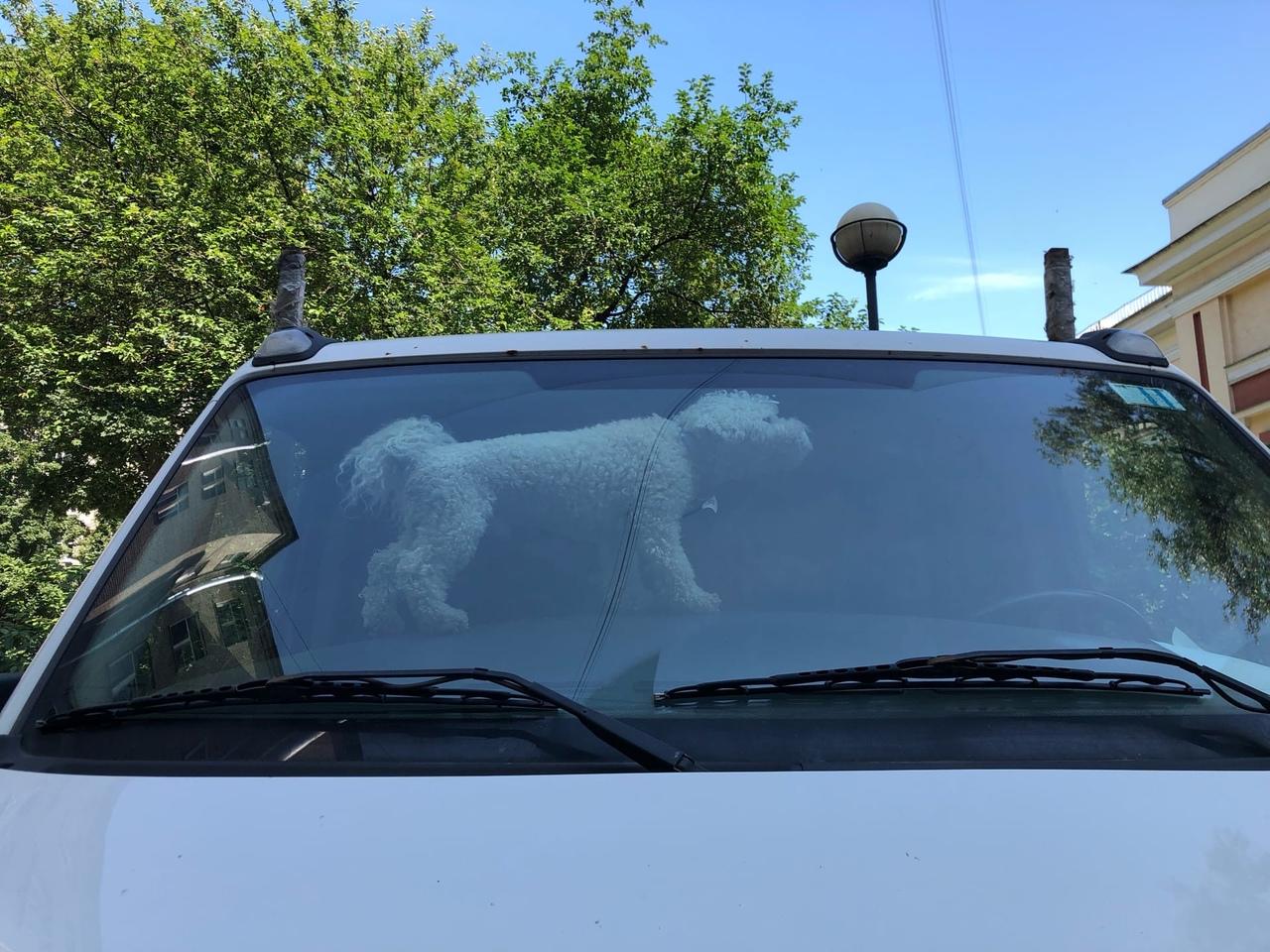 Водитель оставил машину с собакой в нашем дворе на Стачек. На улице 28 градусов, собачка лает за сте...