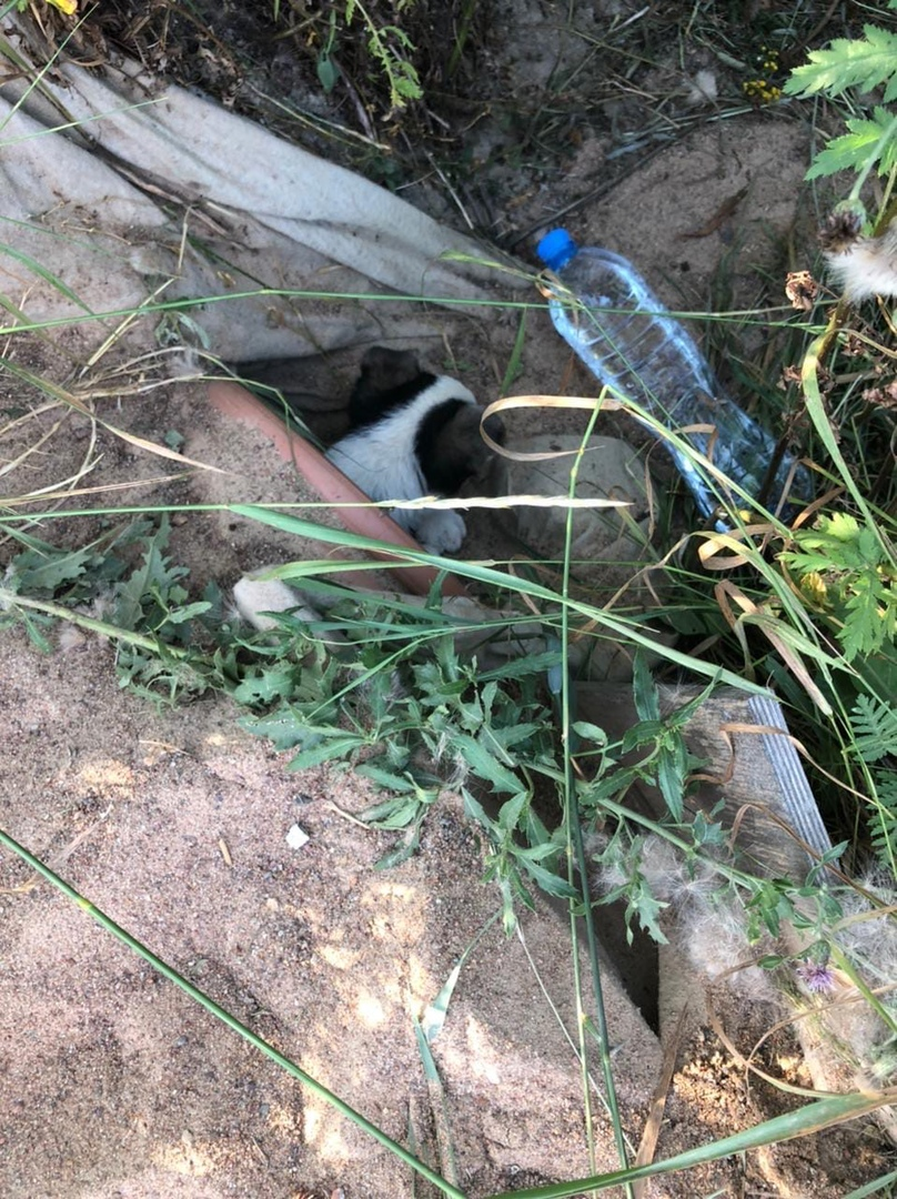 Может быть есть у кого-то знакомые в приютах или питомниках для бездомных животных. Вчера нашли как ...