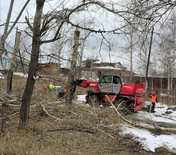 Санитарная обрезка тополей производится в левобережье Усть-Илимска