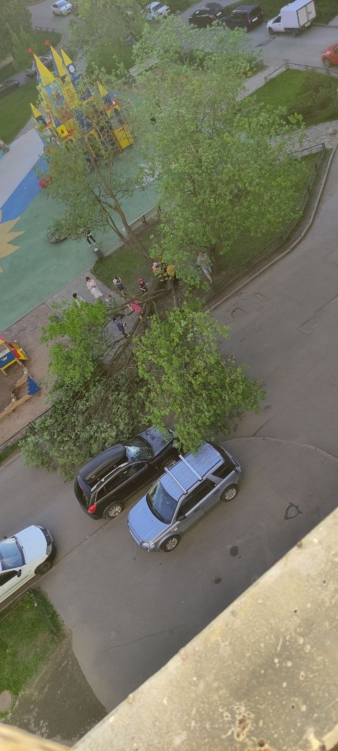 1) Упало дерево, чуть не прибив детей на Богатырском у дома 5к1. (1-2 фото) 2) В парке Екатерингоф ...