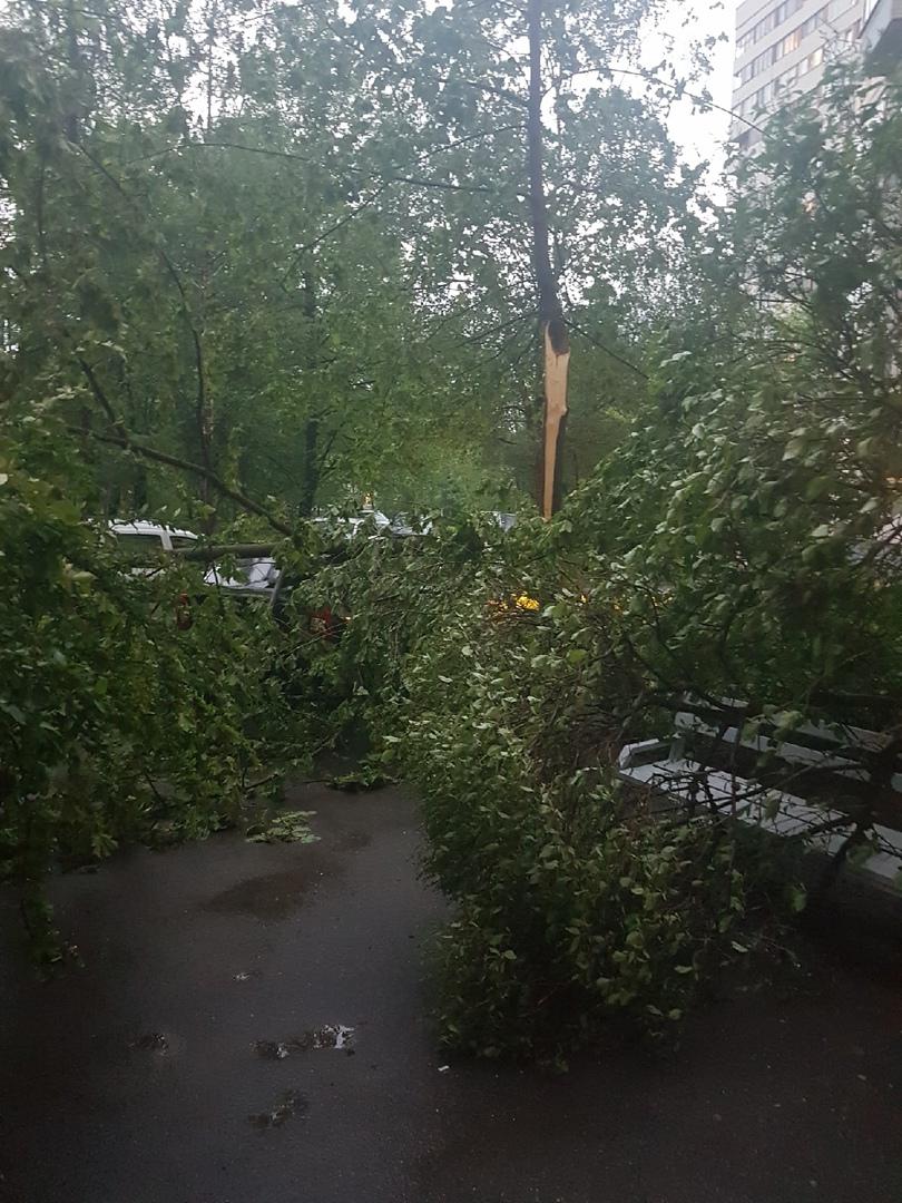 Во дворе д. 6/1 по пр. Испытателей упало дерево перегородив проход к подъезду.
