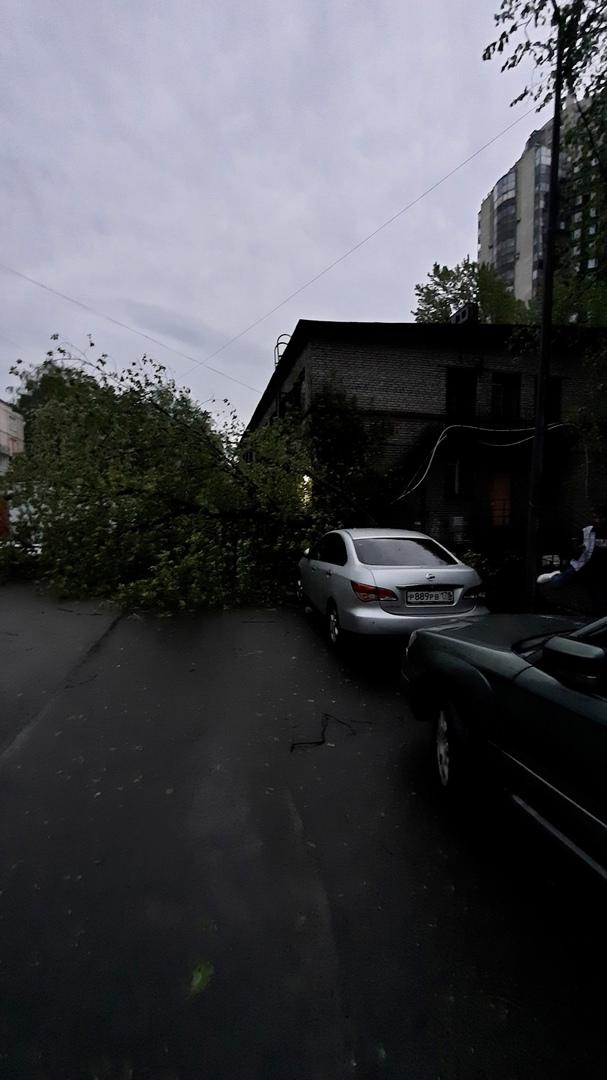 """На Ланском шоссе, во дворе за кинотеатром """"Максим"""", упало несколько деревьев в разных точках. И напр..."""