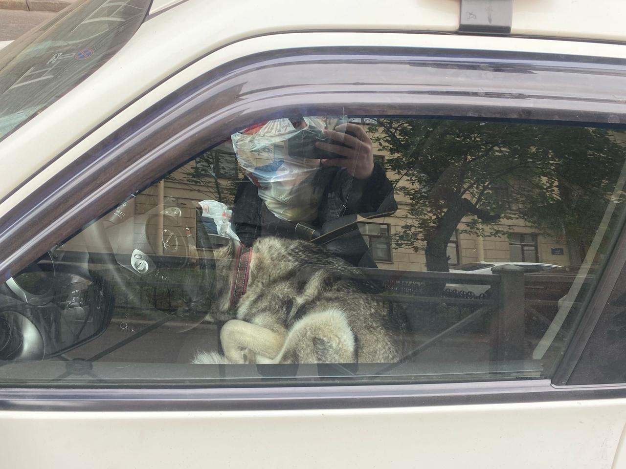 Граждане, которые оставили свою машину, и заперли в ней собаку (дабы не увезли, тк машина под знаком...