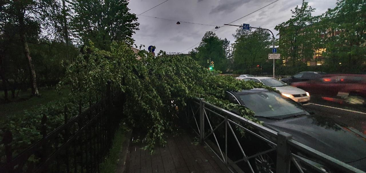 На пересечение Левашовского и Чкаловского пр. упало дерево и аккуратно прикрыла своими ветвями крышу...