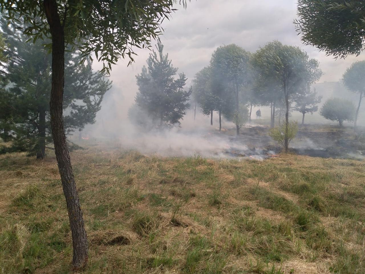 Пожар в Полежаевском парке