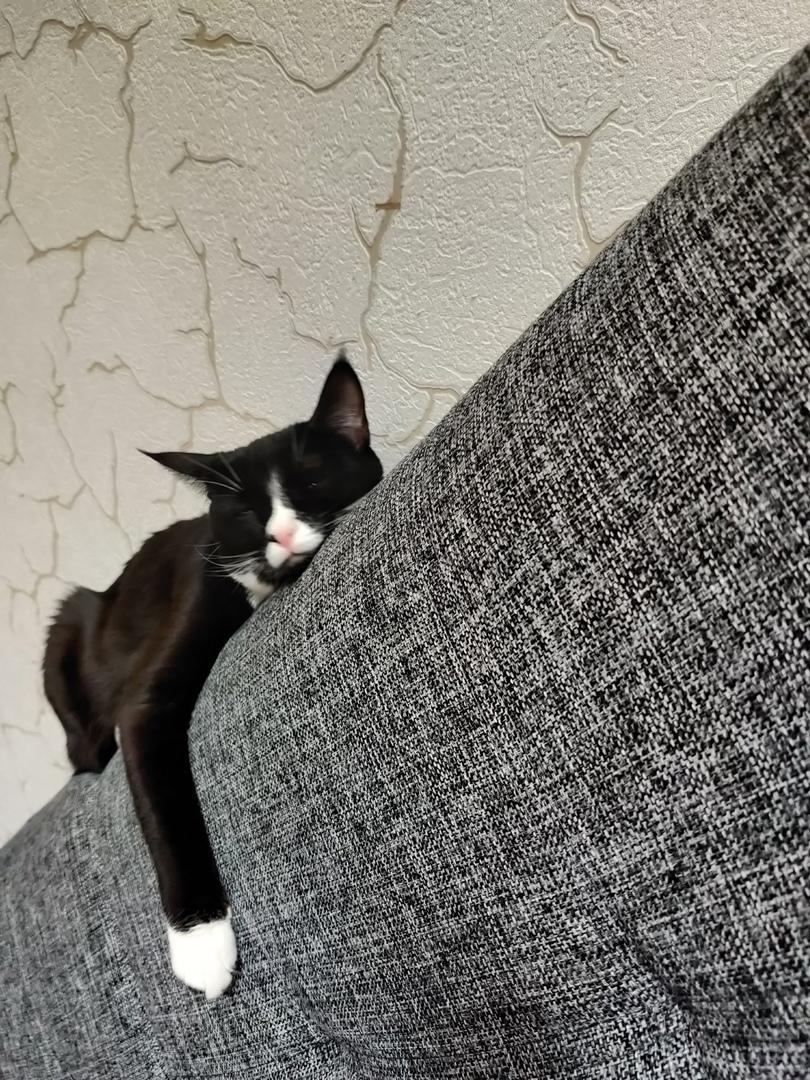 Кошке Кнопе, пережившая в детстве грандиозный стресс, воздалось за это с лихвой. Ее хозяйка поделила...